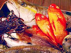 網代港にはとびっきりの魚介が水揚げされます。