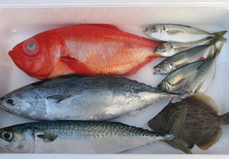 海上釣堀太公望にて釣りの予定があいにくの悪天 候。急遽用意した鯵と鯛を料理しました。